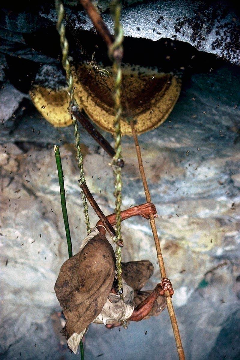 cacadores-de-mel-nepal20