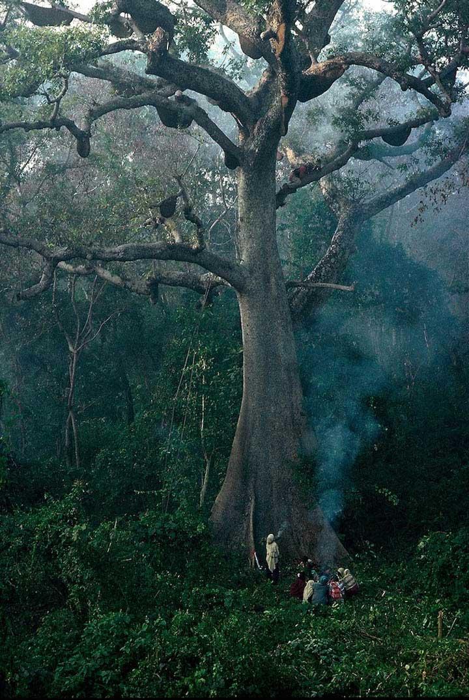 cacadores-de-mel-nepal30