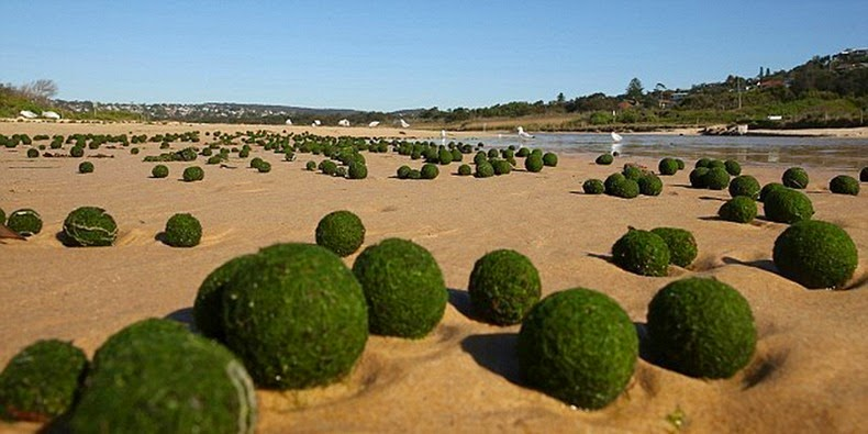 Crédito da foto: http://www.dailymail.co.uk/news/article-2763283/Where-did-green-alien-eggs-come-Scientists-baffled-UFOs-Unidentified-Floating-Objects-washed-Sydney-beach.html
