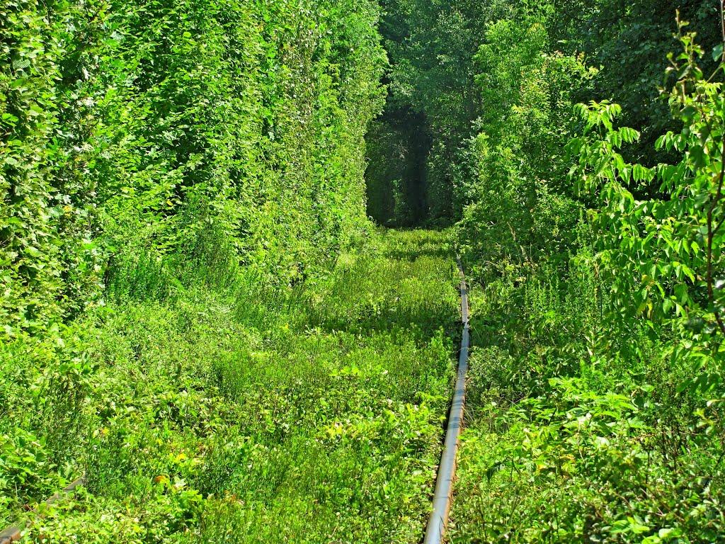 Crédito foto: http://www.panoramio.com/user/3350424