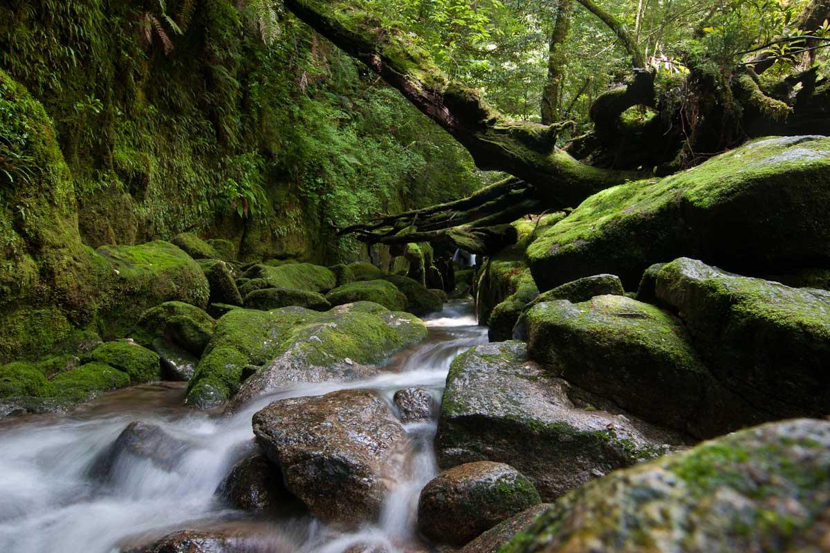 Yakushima, a ilha da vida no Japão