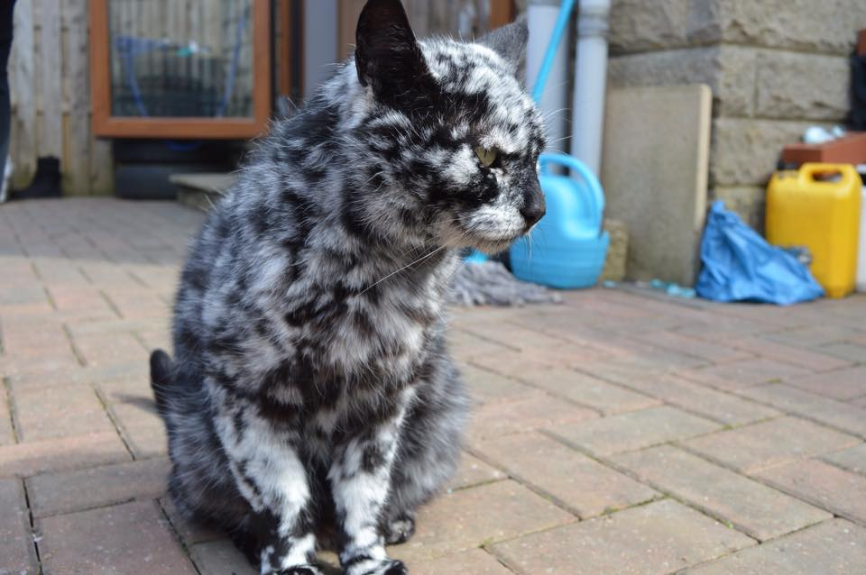 o-gato-que-mudou-de-cor-07