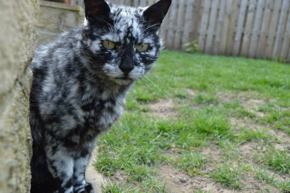 o-gato-que-mudou-de-cor-10