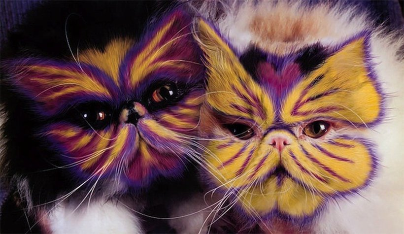 pintura-em-gatos-001