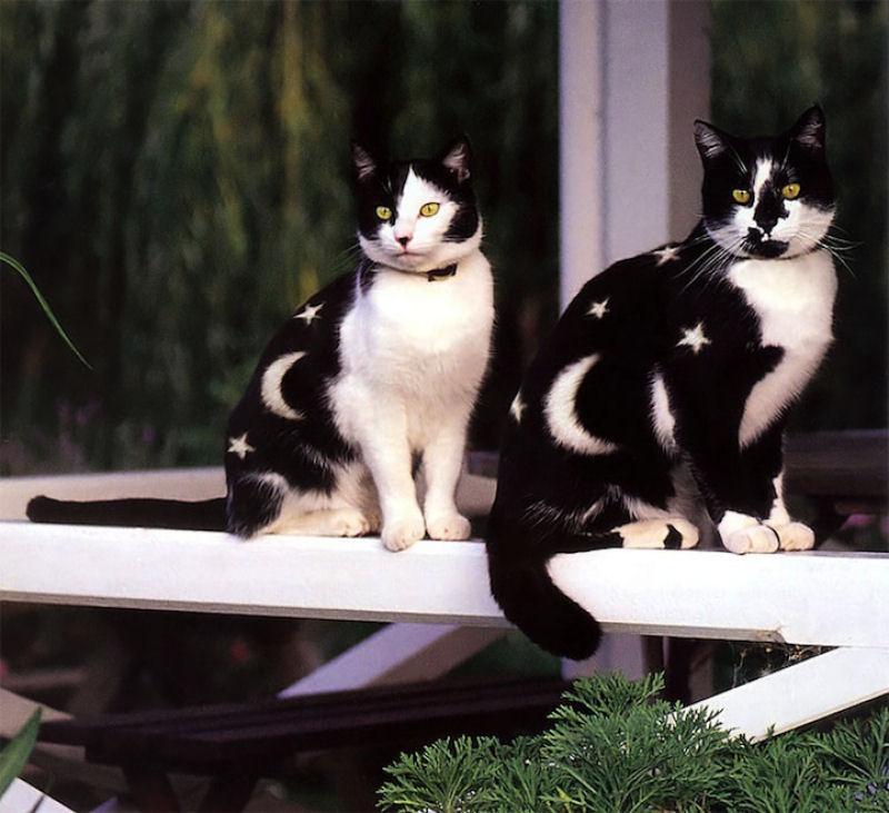 pintura-em-gatos-004