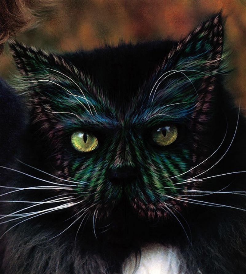 pintura-em-gatos-005