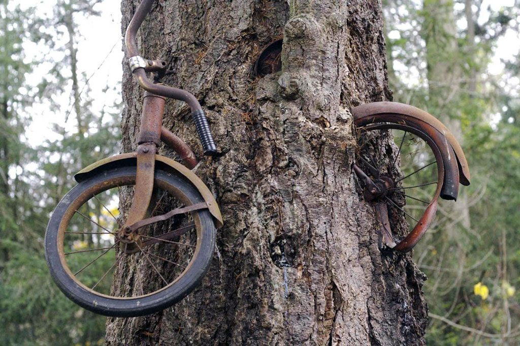 bike-in-tree_002