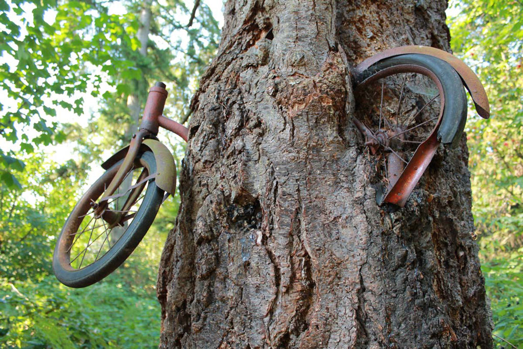 bike-in-tree_004