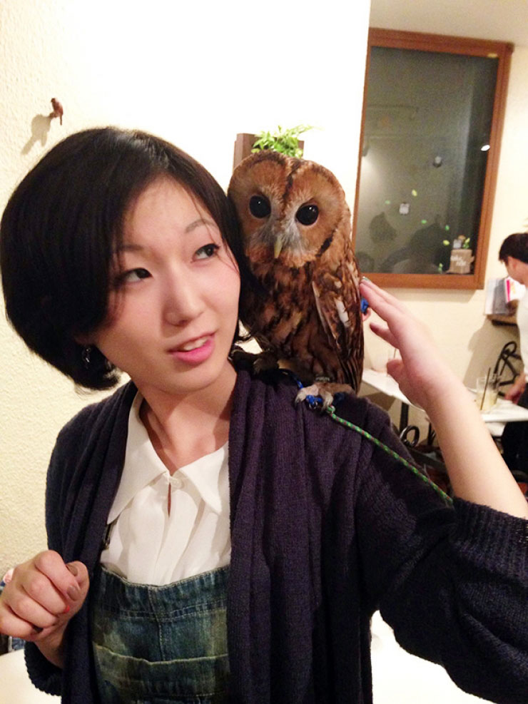 ikefukurou-owl-coffee_008
