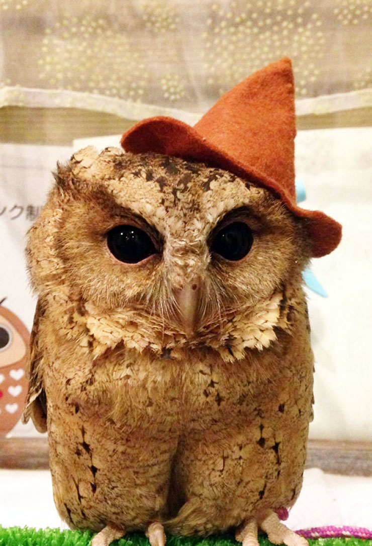 ikefukurou-owl-coffee_009