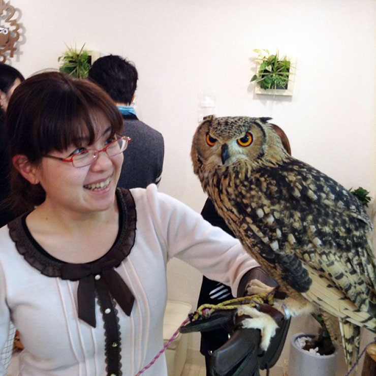 ikefukurou-owl-coffee_011