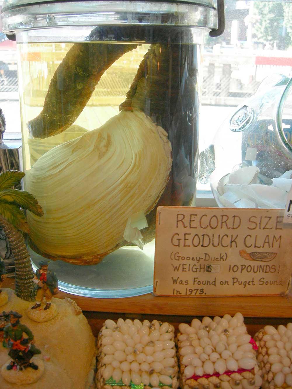 geoduck-005