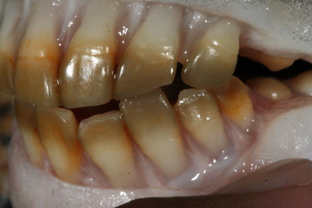 sargo-de-dentes_004